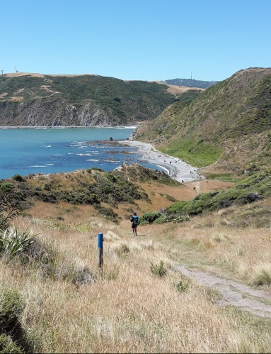 Makara beach is one of 8 amazing family friendly beaches in Wellington